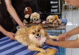Como fazer massagens nos seus pets
