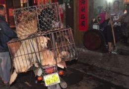 China sacrifica milhares de cães para controlar surto de raiva