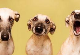 Fotógrafa vira sucesso com retratos de cães