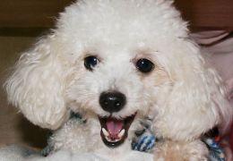 Crianças com disfunção cerebral fazem tratamento com a ajuda de cães