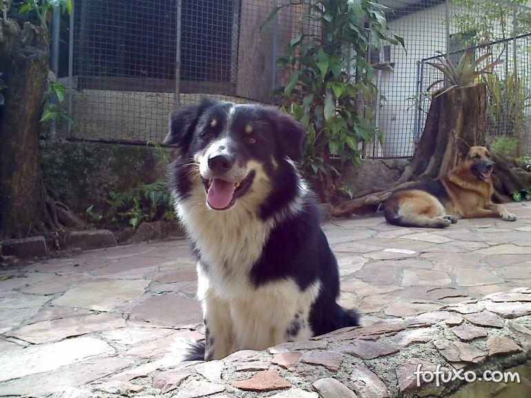 Entenda as tremedeiras do seu cão