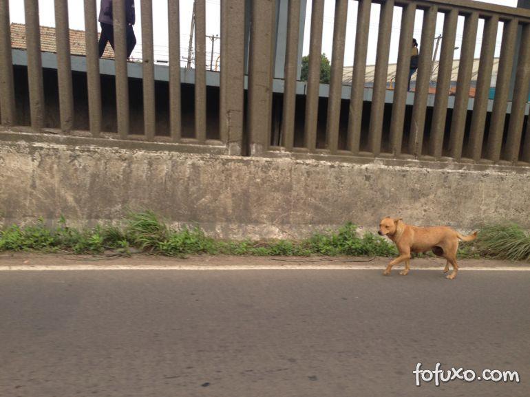 """Cachorro ganha """"escolta"""" em rodovia no Rio Grande do Sul"""