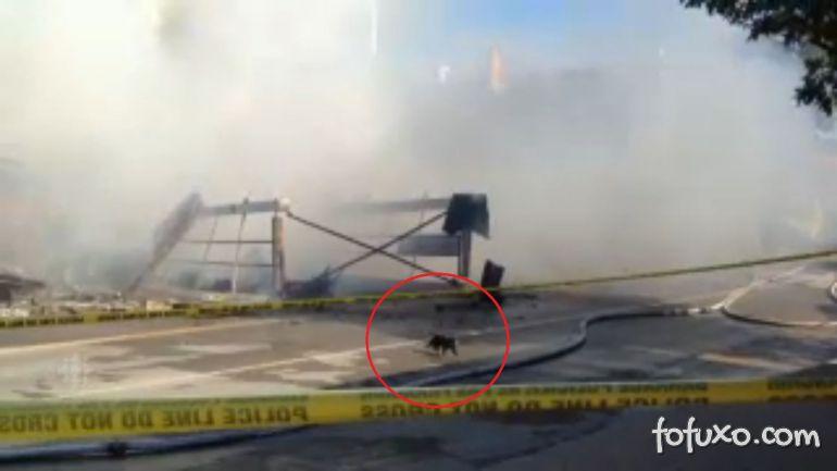 Vídeo flagra gato escapando de desabamento de edifício
