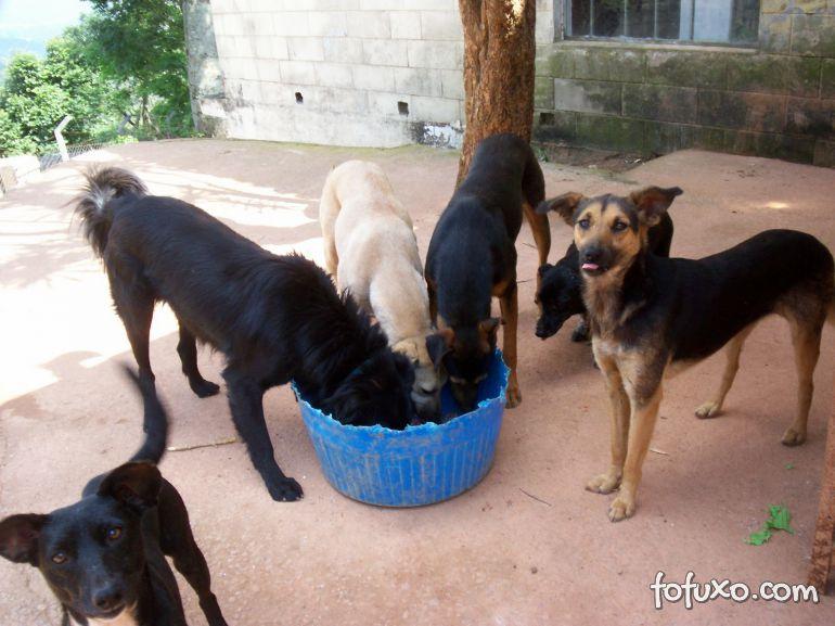 Programa de computador estima população de cães e gatos abandonados