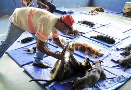 Prefeitura de Londrina poderá castrar pets de beneficiários do Bolsa Família