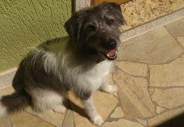 Conheça os motivos que podem fazer com que o seu cachorro esteja mancando