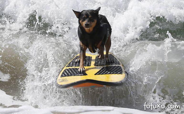 Cães na crista da onda