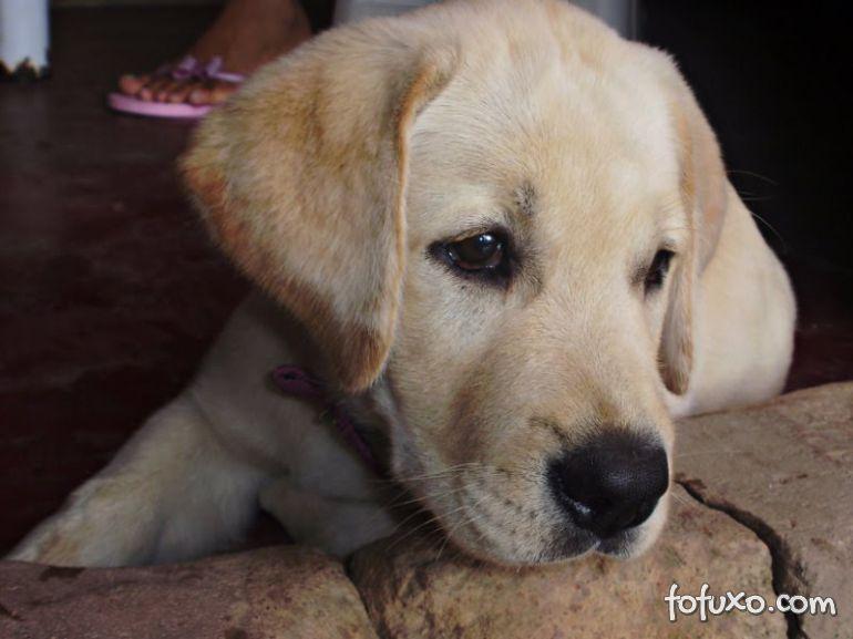 Crianças especiais recebem ajuda de cães em tratamento