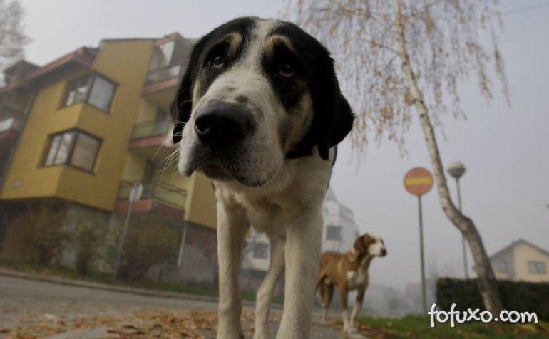 Bósnia cria projeto para recolher os cães de rua