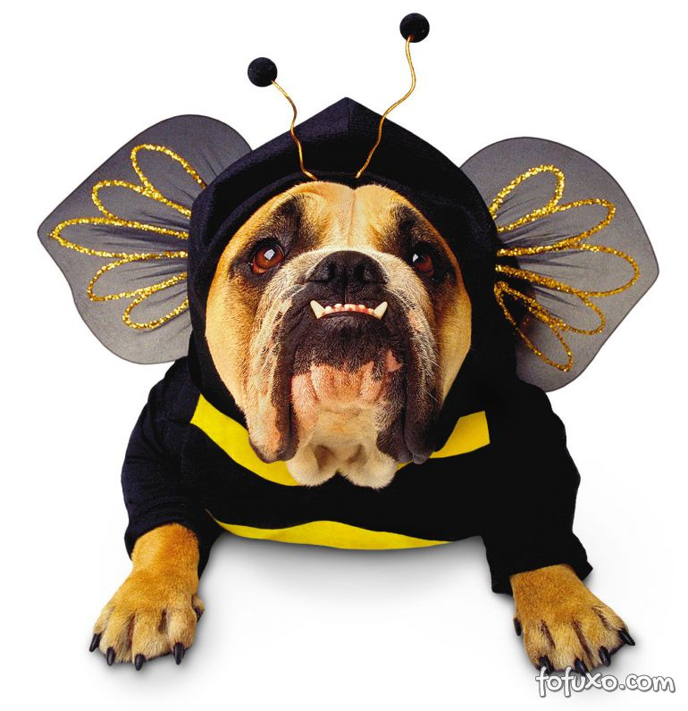 O que fazer quando o meu cão leva uma picada de abelha?