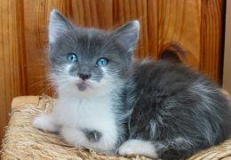 Dicas para minimizar a perda de pelos dos gatos