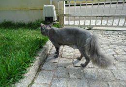 Entenda alguns movimentos do rabo do seu gato
