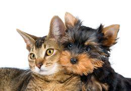 Pets para quem mora sozinho: Cães ou Gatos?