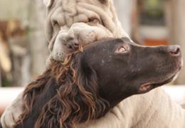 """Conheça mais um aplicativo que pretende ser o """"Tinder"""" para cachorros no Brasil"""