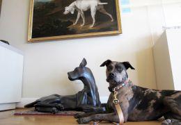 Estados Unidos têm Museu do Cão