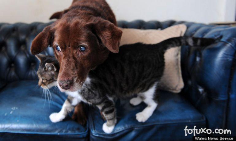 Gato vira guia de um cão deficiente visual