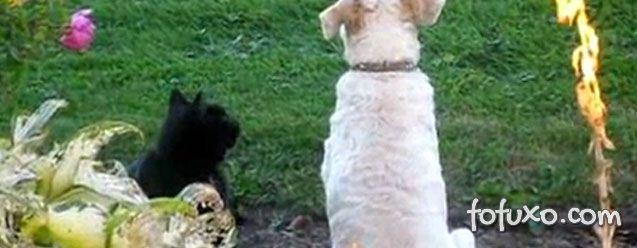 Fofura do dia: Gato massageando as costas de um cachorro