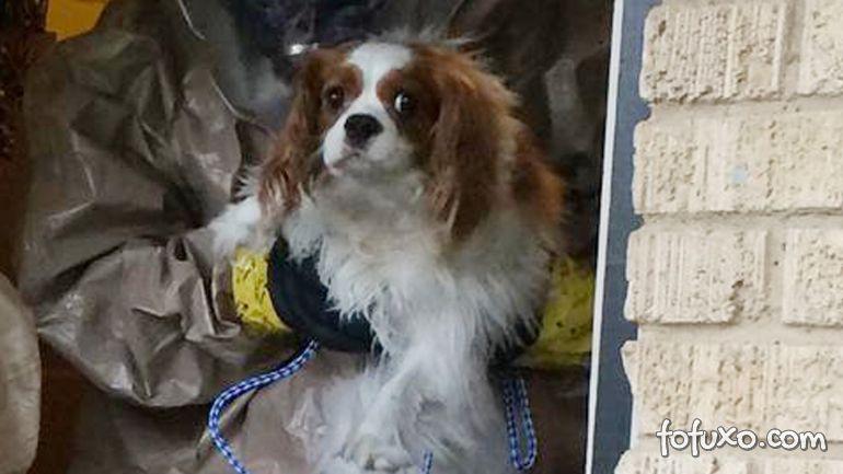 Cachorro de enfermeira com ebola não contraiu a doença