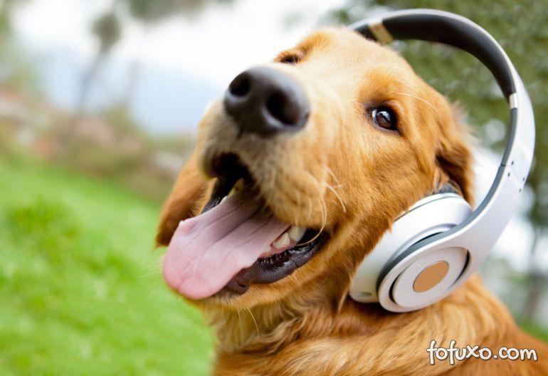 Musicoterapia também pode ser bom para cachorro