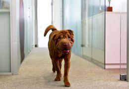 Estudo comprova que animais ajudam a combater o estresse no trabalho