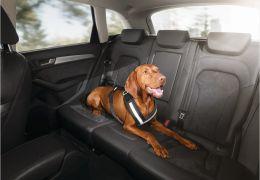 Audi apresenta acessórios para cães