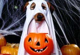 Cachorros e gatos também comemoram o Halloween