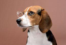 Cientistas desenvolvem um novo equipamento para traduzir a linguagem dos cães