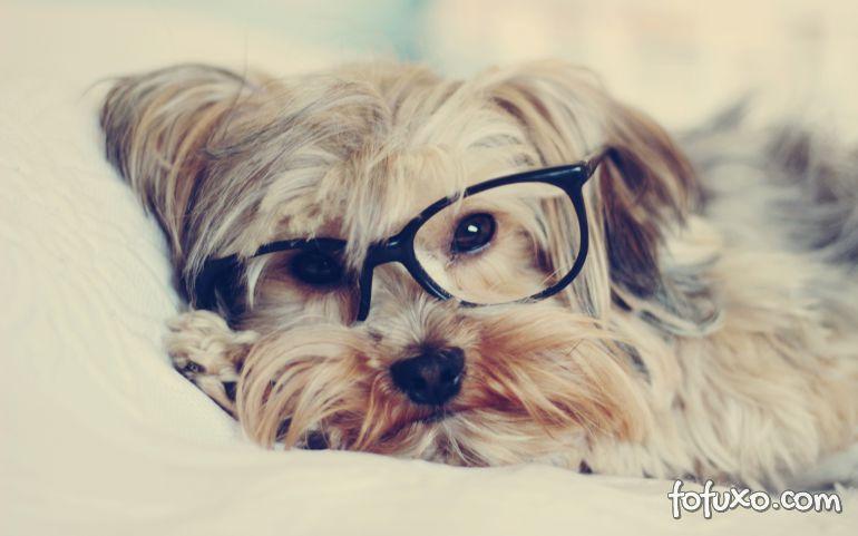 Como saber se o cão está desenvolvendo problemas de visão?
