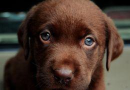 Expectativa média de cães no Brasil ainda é baixa