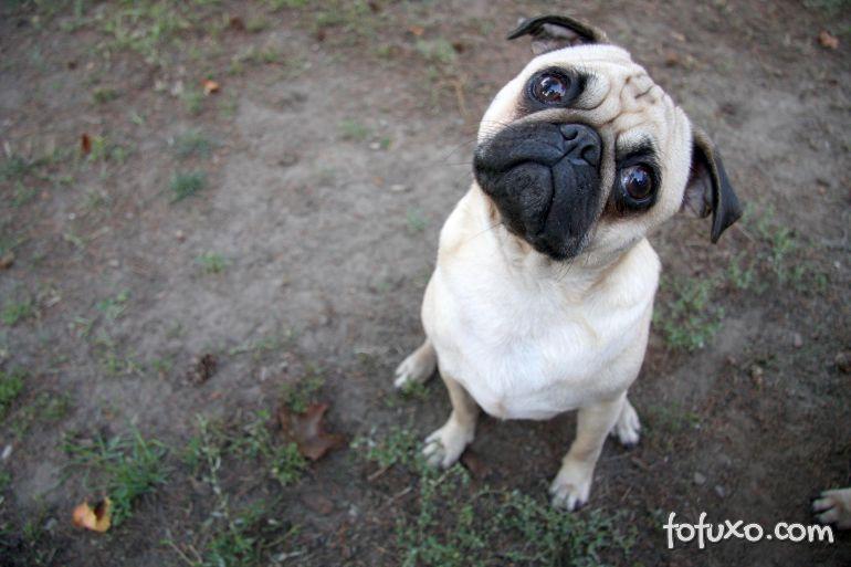 """Pesquisadores afirmam que cães fazem """"cara de coitado"""" de propósito"""