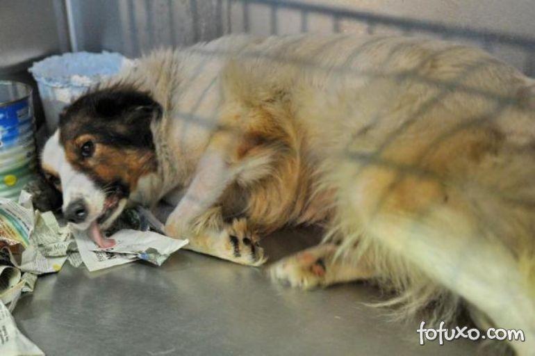Veterinário pagará multa por maus-tratos contra cães