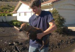 Cachorro sobrevive e é resgatado de desabamento