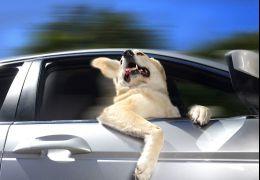 Ensaio mostra cães com a cabeça para fora do carro