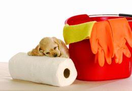 Dicas para limpar as necessidades dos cachorros filhotes