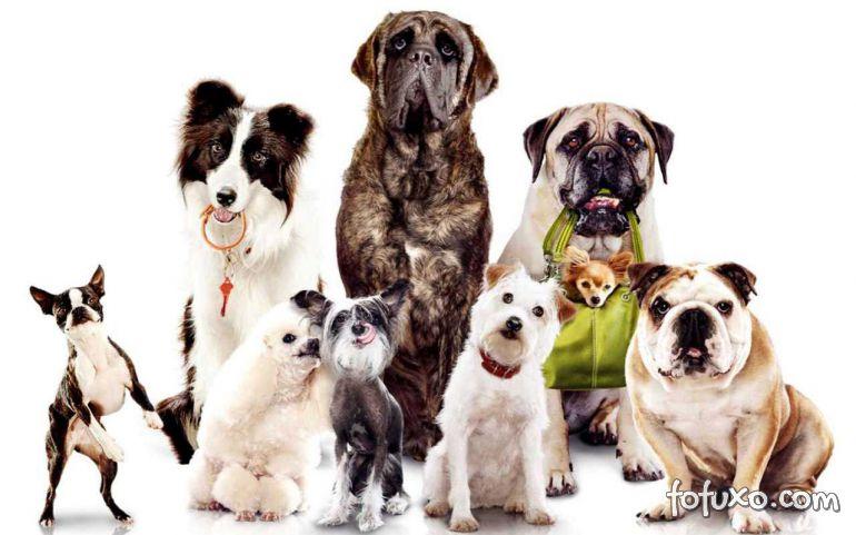 Redes Sociais se tornam meios mais eficientes para busca de pets perdidos