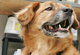 Cachorro que sobreviveu ao Katrina toma conta de gatos
