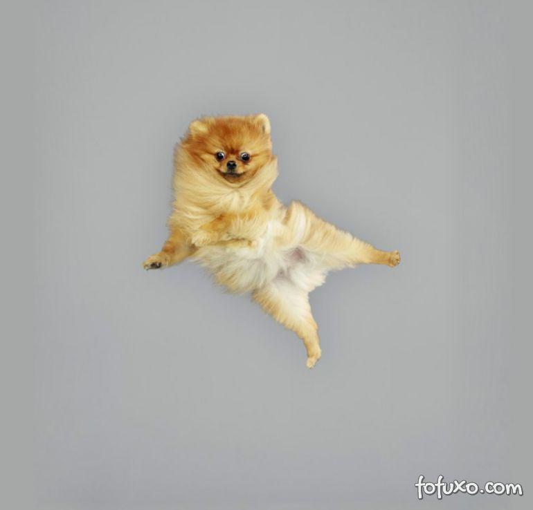 Fotógrafa cria ensaios com cães voadores