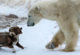 Fotógrafo flagra cão enfrentando urso