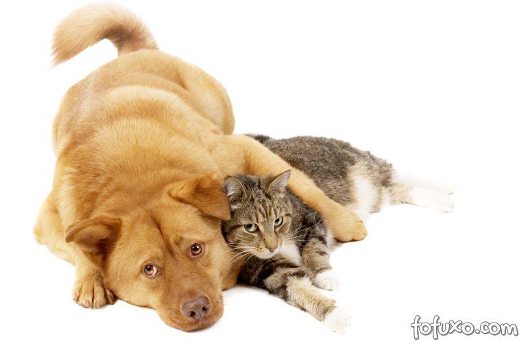 Suíços também começam mobilização contra consumo de carne de cães e gatos