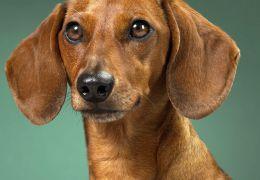 Estudos revelam novidades em relação ao comportamento dos cães