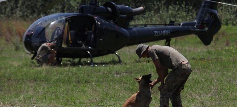 Cães treinados ajudam no combate à caça de rinocerontes