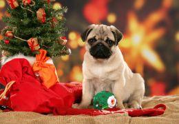 Cuidado com os alimentos natalinos para o seu cão