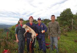 Cão é resgatado de penhasco