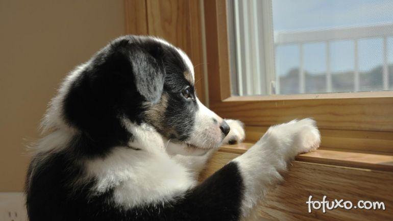 Confira a reação deste cão quando é deixado sozinho