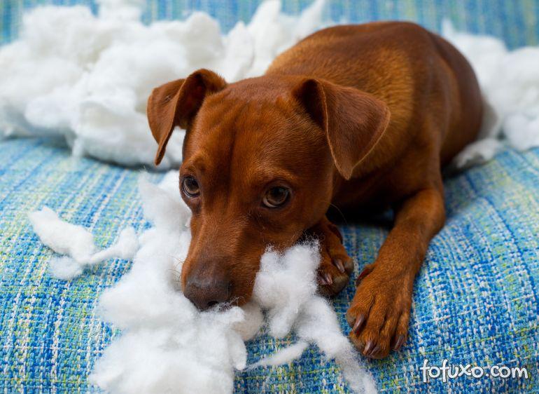 """Cachorros """"mau comportados"""" teriam ligação mais forte com seus donos"""