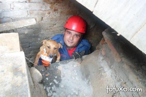 Filhote de cachorro é resgatado e mãe do filhote assiste de perto