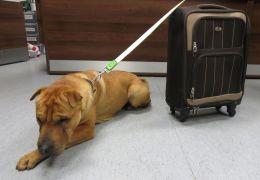 Saiba o que aconteceu com o cão abandonado e amarrado em mala