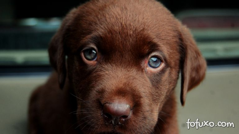O Que Deixa O Seu Cão Triste?