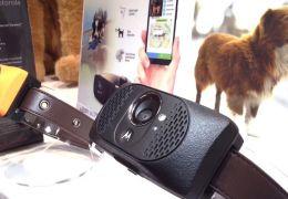 Motorola lança coleira inteligente para cães
