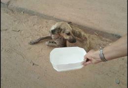 Campanha pede para pessoas colocarem potes com água nas ruas para cães e gatos